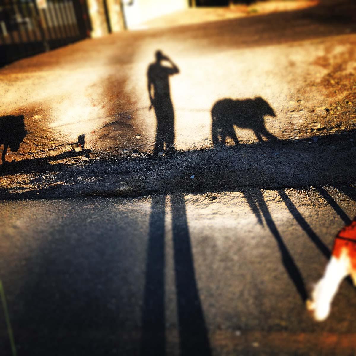 Shadows & paw-loss