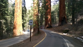 Park road in Sequoia National Park